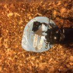 タランドゥスオオツヤクワガタ菌糸ボトル産卵