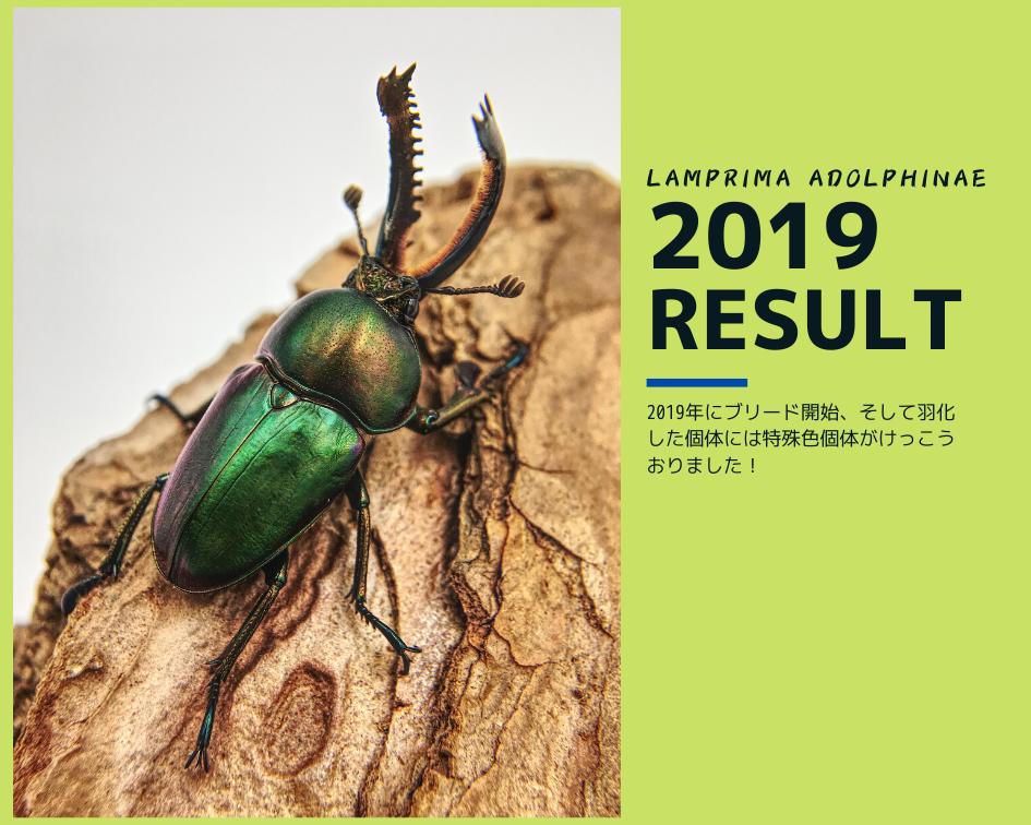 パプアキンイロクワガタ羽化報告_2019Aライン