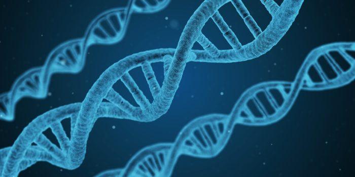 【血統の話 第1回】クワカブ飼育における血統の重要性