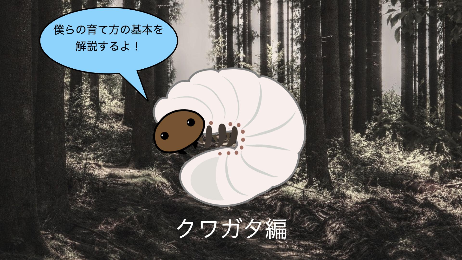 【初心者向け】クワガタ幼虫飼育の基本