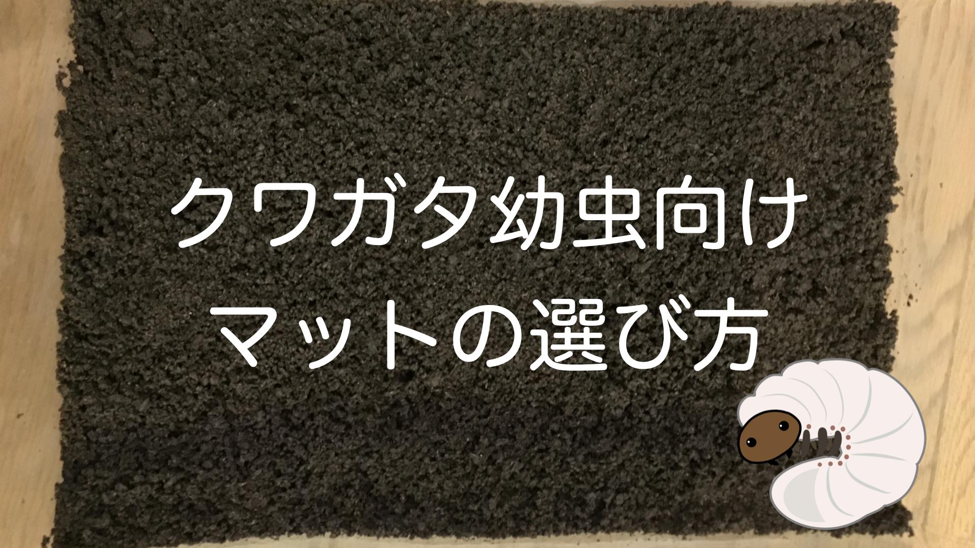 【中級者向け】クワガタ幼虫飼育におけるマットの選び方と使い方